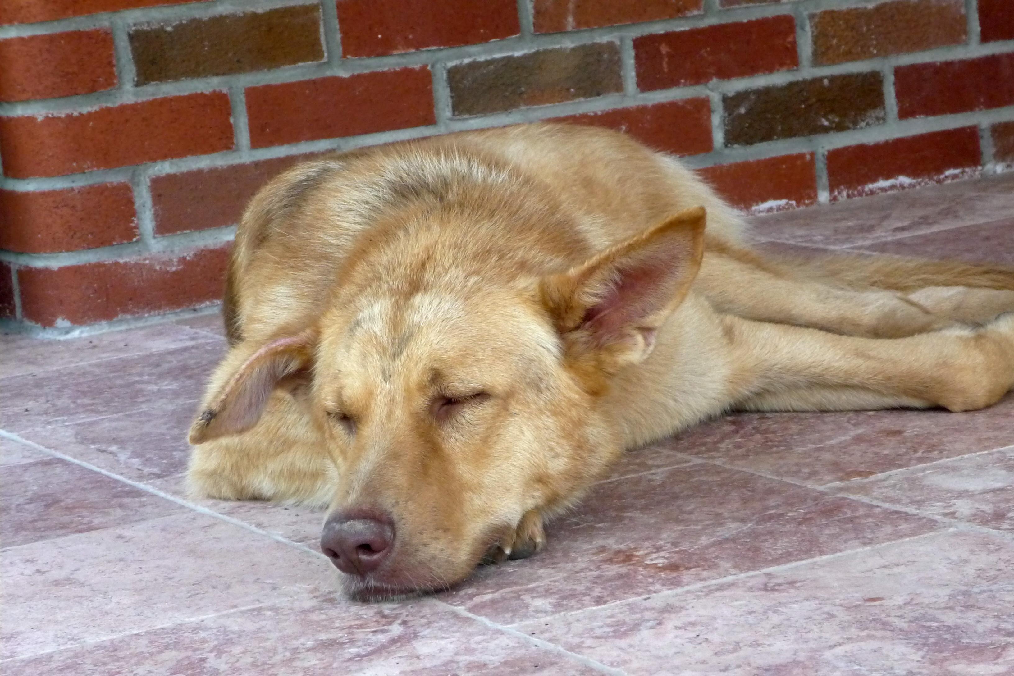 Köpeğin Hasta Olup Olmadığını Anlamak Mümkün Mü