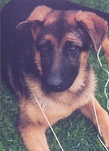 yavru köpeğim Efe