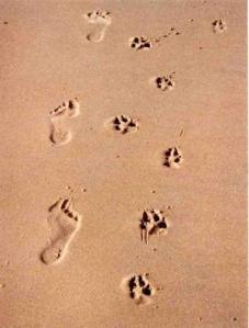 paw foot print