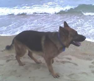 Köpeğim Efe Junior