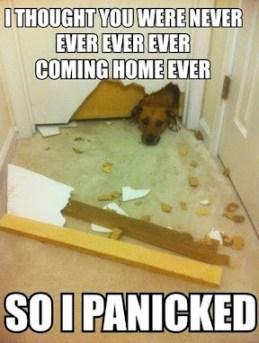 Köpeklerde yalnızlık korkusu