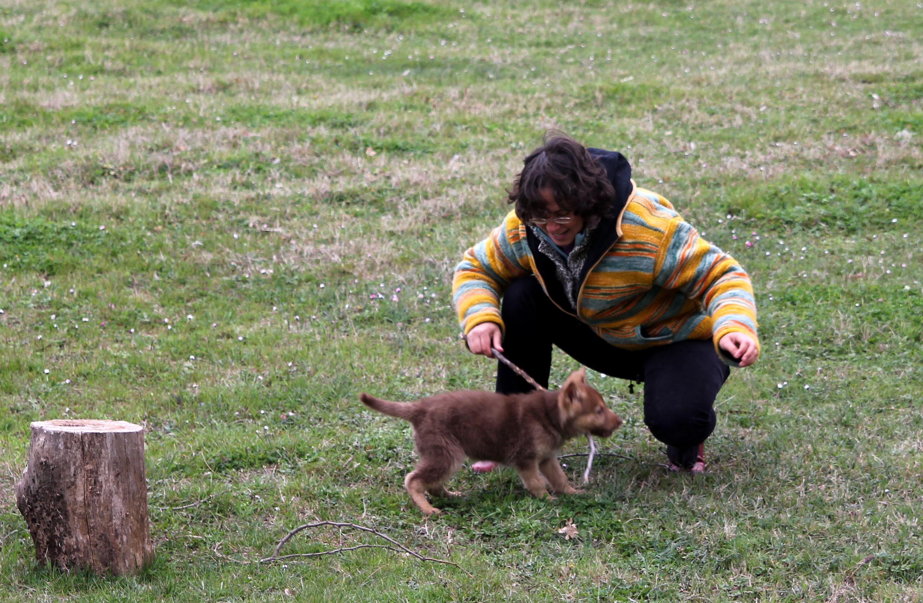 Köpek yavrusu sokaktaki tuvalete nasıl alıştırılır: çocuğa önemli bir konuyu öğretiriz